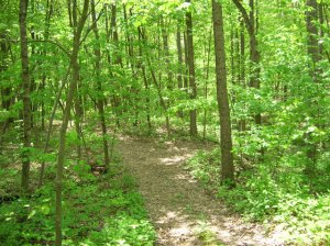 path-through-the-woods.jpg?w=300&h=224