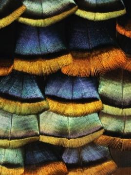 darrell-gulin-detail-of-a-turkey-feather_i-G-9-952-9S7K000Z