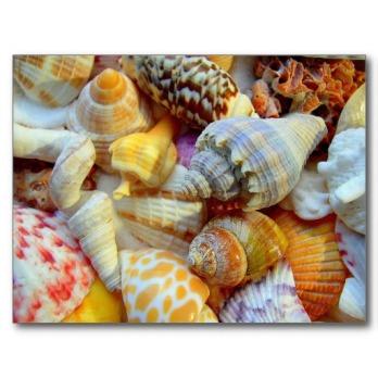 tropical_seashells_photography_postcards-r17d760b49c1a4504a7eac38c521b5f6f_vgbaq_8byvr_512