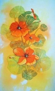 Nasturtiums, Judith Jerams, France