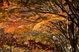 fall-canopy-by-union_30704477712_o