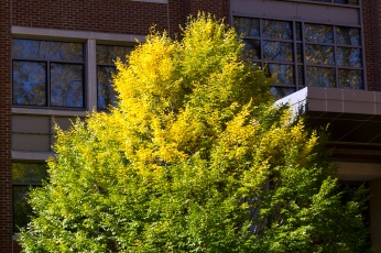 gree-and-yellow-tree-top-in-diag_30784699726_o