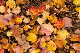ground-leaves-1_30733337411_o