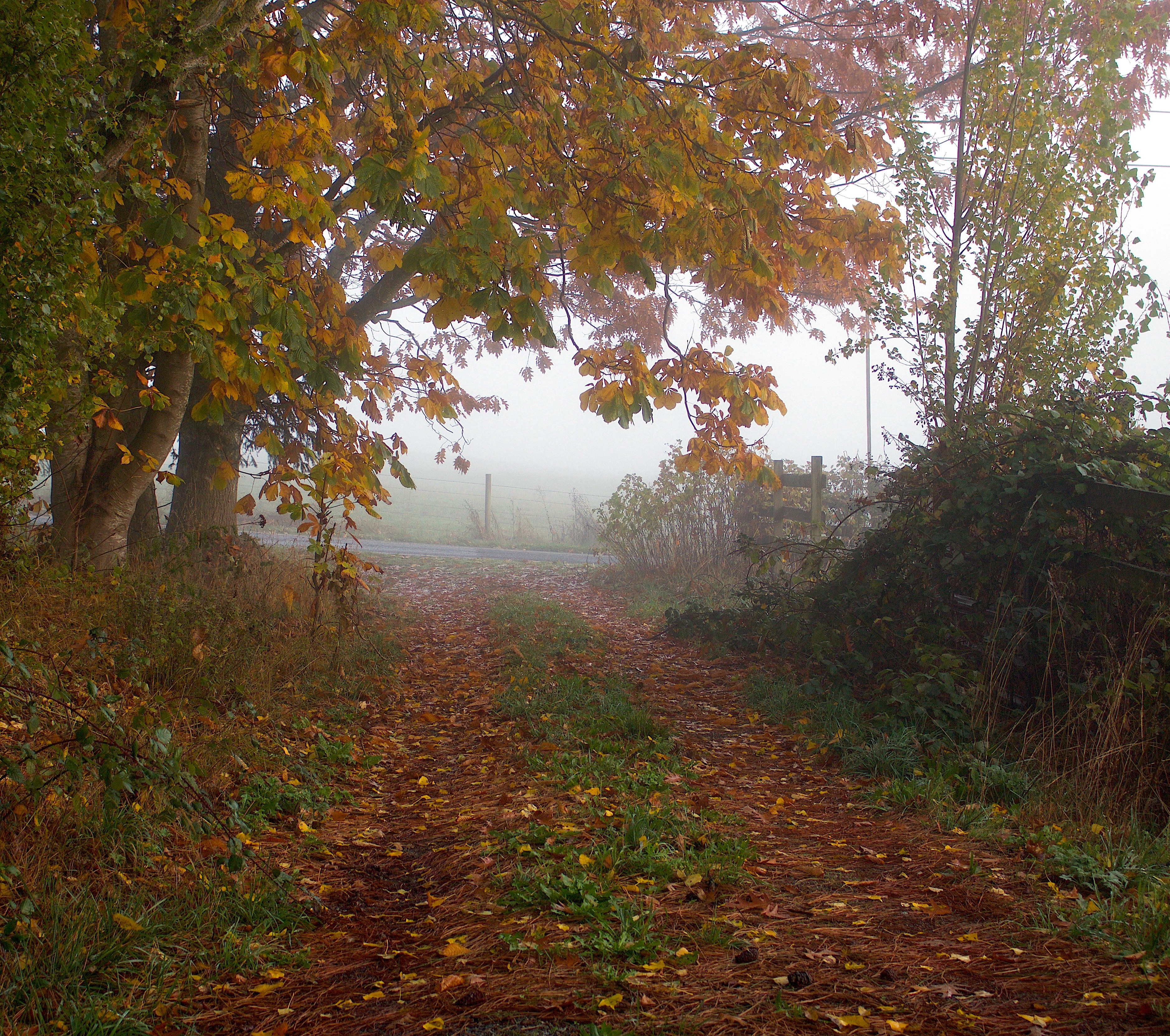 fogdriveway2